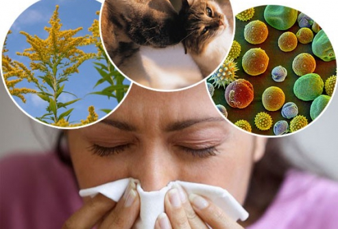 Аллергены, провоцирующие астматический бронхит